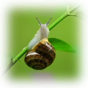 SNAIL_EXTRACT