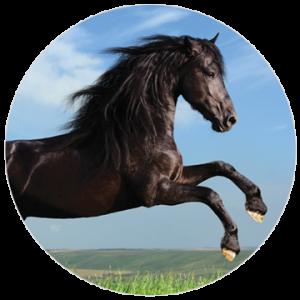 Placenta Horse